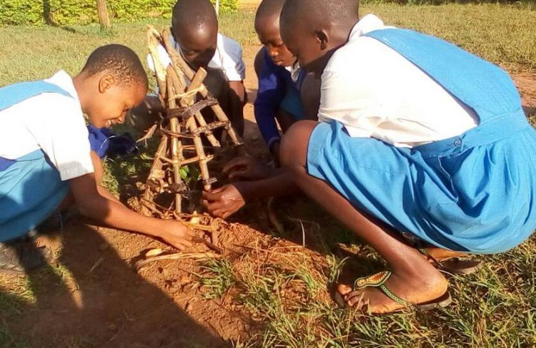 Global Action Days a success in Eco-Schools